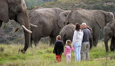 Knysna Elephant Park Daily Tours