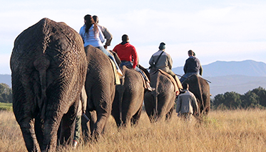 Elephant Rides at The Knysna Elephant Park