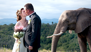 Weddings and Functions at The Knysna Elephant Park