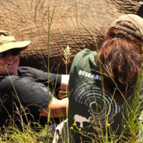 Elephant Research