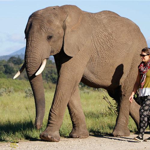 Breakfast Elephant Walks