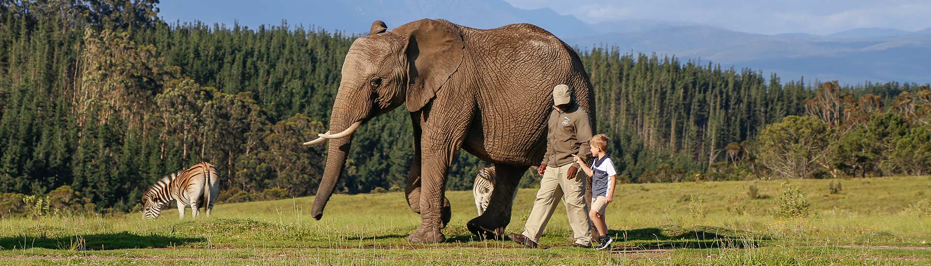 Elephant-Experiences-Garden-Route