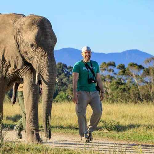 Elephant Walks